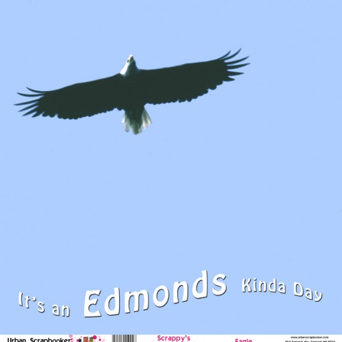 Bald Eagle  Scrapbook Craft Paper 12 x 12 inch