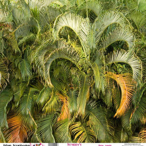 Palm Jungle  Scrapbook Paper 12 x 12 inch