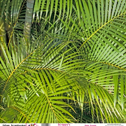 Palm Fronds  Scrapbook Paper 12 x 12 inch