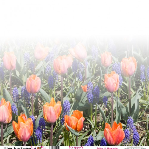 Tulips and Hyacinths Scrapbook Paper 12 x 12 inch