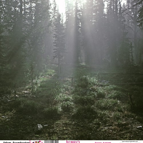 Forest Sunlight Beams  Scrapbook Paper 12 x 12 inch
