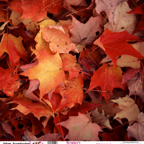 Fall Leaves  Scrapbook Paper 12 x 12 inch