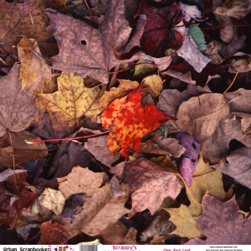 One Red Leaf  Scrapbook Paper 12 x 12 inch