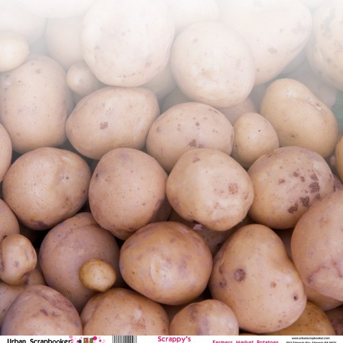 Farmers Market Potatoes  Scrapbook Paper 12 x 12 inch