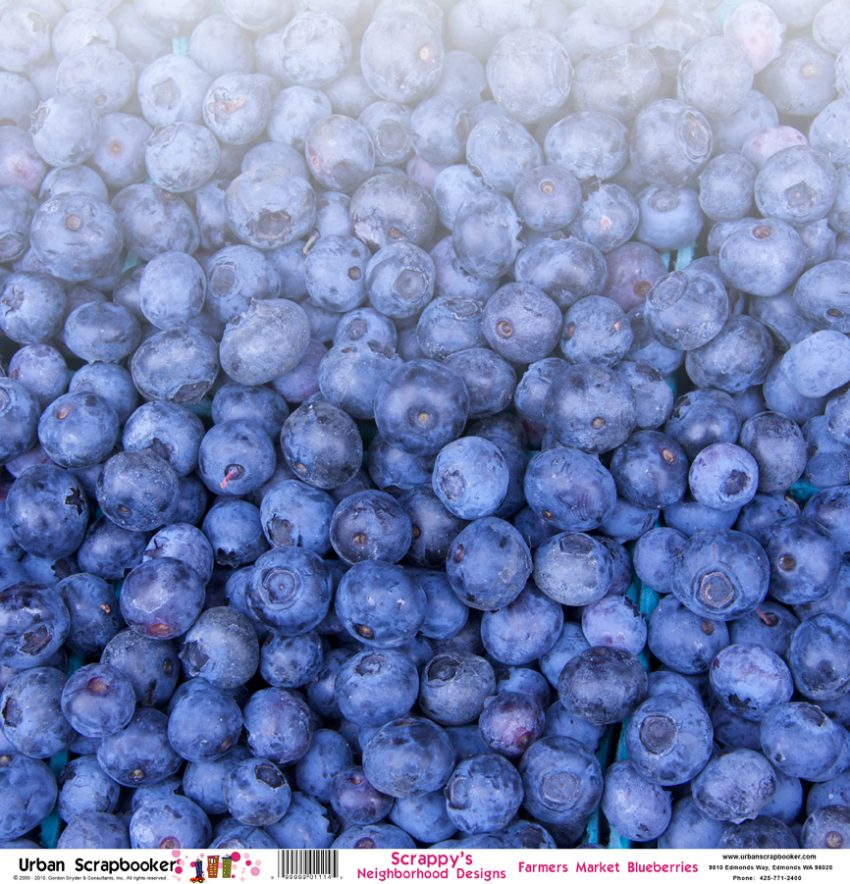 Farmers Market Blueberries  Scrapbook Paper 12 x 12 inch