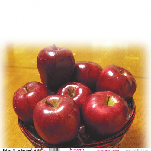 Washington Apples  Scrapbook Paper 12 x 12 inch