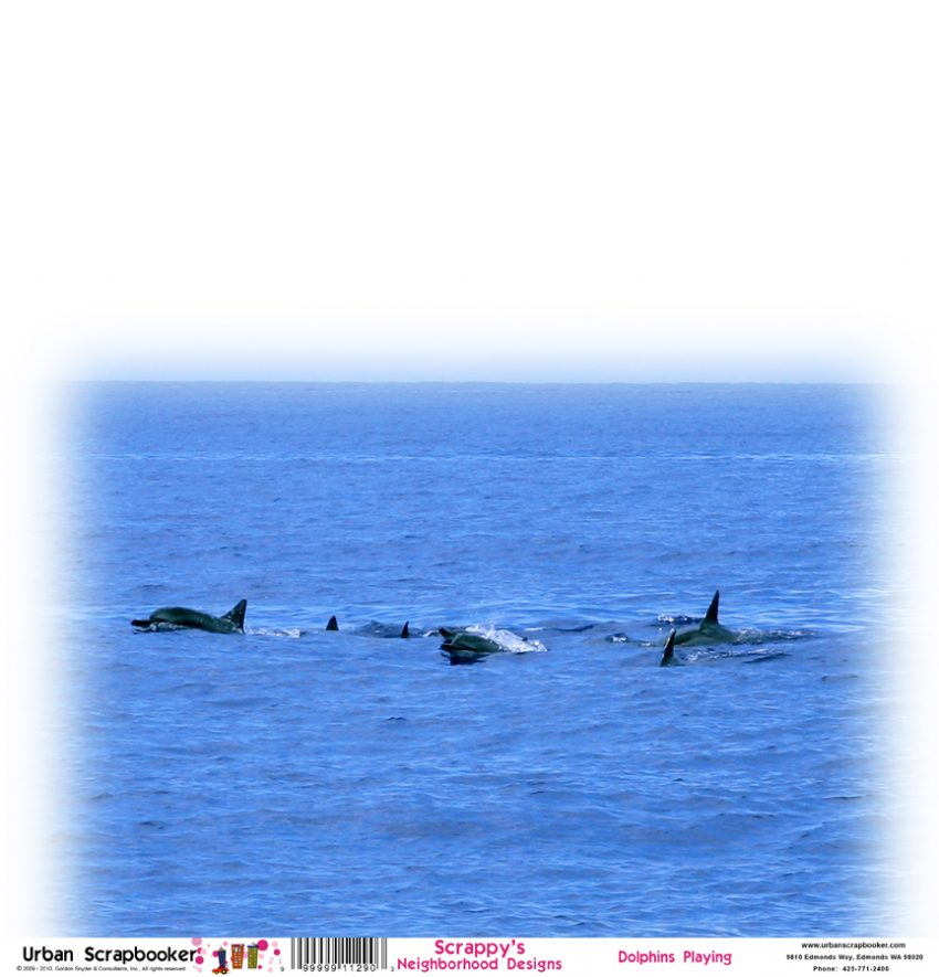 Dolphins Playing  Scrapbook Paper 12 x 12 inch