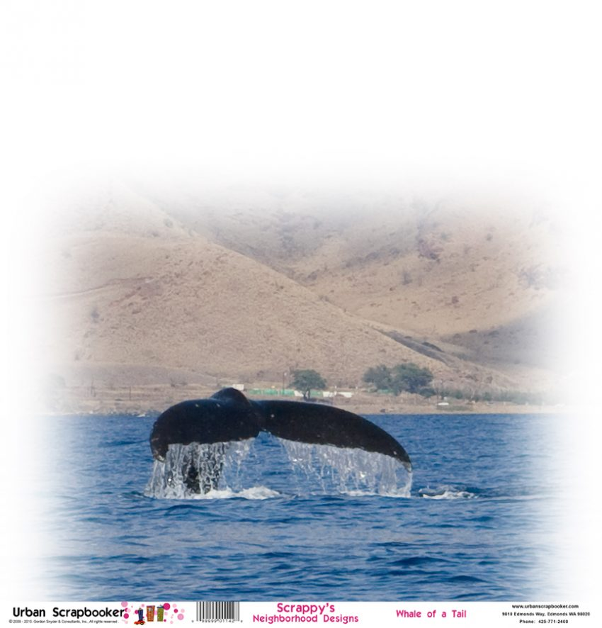 Whale Tail  Scrapbook Paper 12 x 12 inch